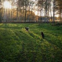 В лесу :: Evgenija Enot