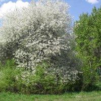 В этом парке старинном весна :: Надежда