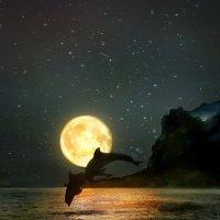 ночь :: лада шлёнова