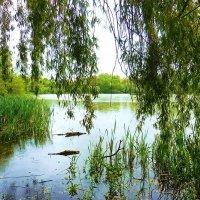 Уголок Летнего озера :: Маргарита Батырева