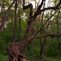 Сказочное дерево :: Сергей Казмирчук