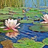 там лилии цветут... :: Elena Wymann