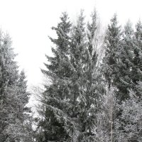 Зимняя сказка :: Polina Pavliuk