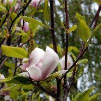 Цветок :: Natali