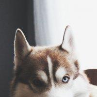 Макс_3 :: Елена
