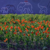 Слонята шумною гурьбой по Ижевску кочуют :: Владимир Максимов