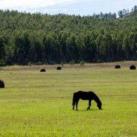 """""""...поле с конем..."""" :: Виталий ИВАНОВ"""
