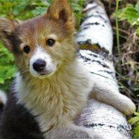Малыш в лесу :: Сергей Чиняев