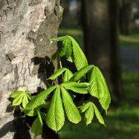 майская зелень :: Татьяна Найдёнова