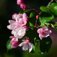 весна :: Натали Акшинцева
