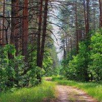 Сегодня солнечно в лесу... :: Лесо-Вед (Баранов)