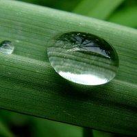 капля дождя :: djangalina *