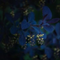 Цветочки :: Владимир Горубин