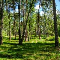 В майском лесу под Смоленском :: Милешкин Владимир Алексеевич