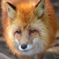 Животные тоже плачут. :: kirm2 .