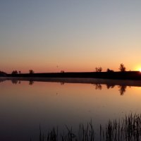 Утро на пруду :: Алексей Неплюев