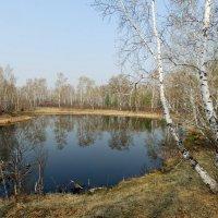 лесное озеро :: Анна