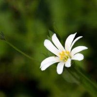 Цветочек :: Мария Гура