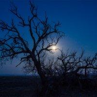 Луна :: Альберт Беляев