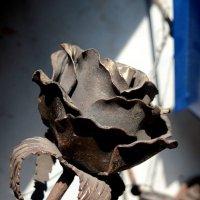 Металлическая роза :: Асылбек Айманов