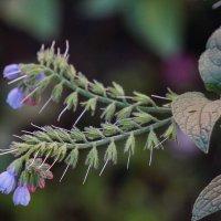Цветы :: Андрей Майоров
