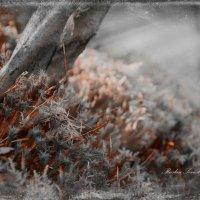 природа живая и неживая :: סּﮗRuslan HAIBIKE Sevastyanovסּﮗסּ