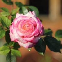 Царица цветочного королевства :: Marina K