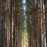 Туннель в лесу :: Нина