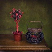 Кофейное дерево :: Надежда