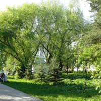 В парке :: Александр Садовский