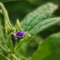 Из майской флоры :: Va-Dim ...