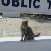 кошки Кипра :: tgtyjdrf