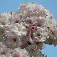 Букет весны :: Арина