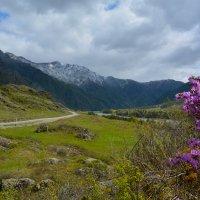В долине Катуни, :: Валерий Медведев