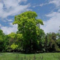 Весна в парке :: Swetlana V