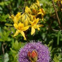 Цветы :: татьяна петракова