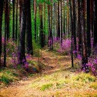 Сказочный лес г. Саянска :: Inessa Shabalina