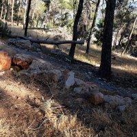 прогулка в лесу :: evgeni vaizer