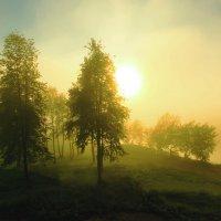 ранним  туманным  утром :: Александр Есликов
