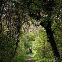 тропа в зелёный мир :: Виктор Фин
