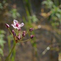 цветок :: Katerina Sheglova