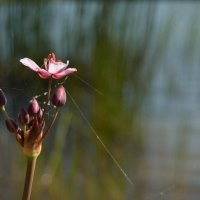 цветок 1 :: Katerina Sheglova