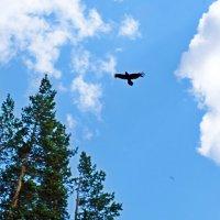 Черный ворон,что ты вьешься... :: Елена Фалилеева-Диомидова