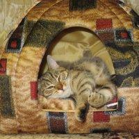 Пришла к коту однажды лень... :: Ирина Рачкова