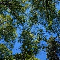 высокое небо :: Alexandr Staroverov