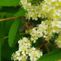 Монастырские пчелы :: Нина