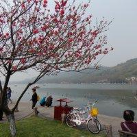 Китайский досуг .Озеро Сиху :: Лариса Журавлева