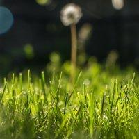 Трава у дома :: Denis Avramchuk