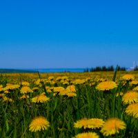 Море цветов :: Алексей М