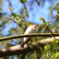 В глуши деревьев :: Sergey (Apg)